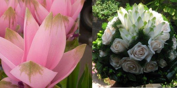 Curcuma Bouquet Sposa.Curcuma Per L Estate Fashion Bride