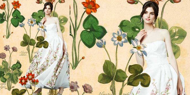 Dolce Gabbana botanica