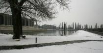 E' il primo giorno di timida neve, qui in Olanda. Il viale, bianco, si traveste da bosco e profuma di...