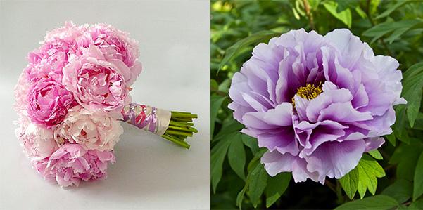 Primavera tempo di peonie fashion bride for Peonie periodo