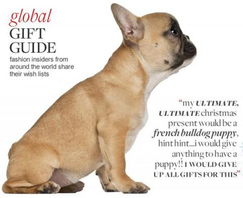 french-bulldog-trendy